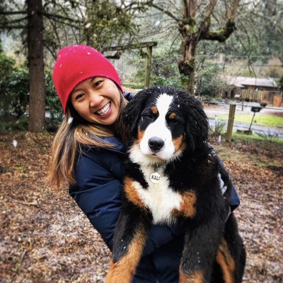 Bernese Mountain Dog Doggo Insurance